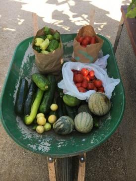 Ninos Harvest